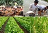 Quyết liệt tái cơ cấu ngành nông nghiệp